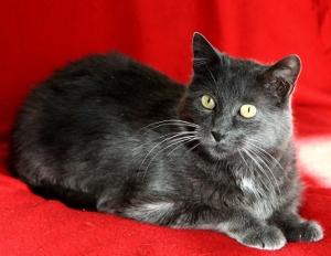 parrainez-nos-chats-chats-libres-de-colomiers