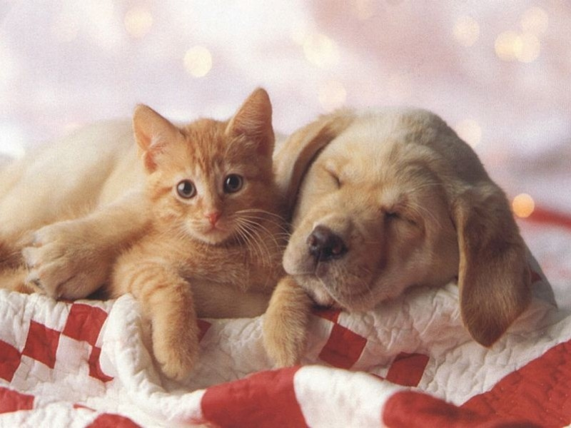 garde-pour-animaux-chats-chiens