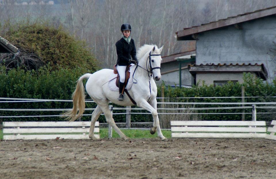 recherche-demi-tiers-de-pension-pour-mon-cheval