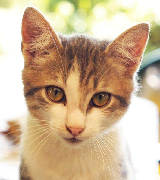 adorable-chaton-a-donner