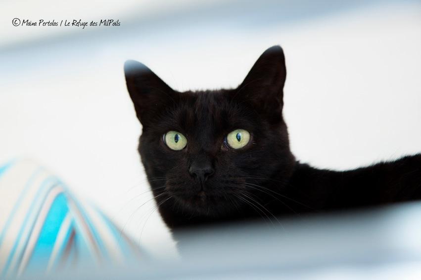 nos-chats-a-parrainer-ont-besoin-de-vous