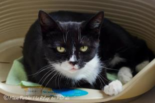 hera-minette-adorable-a-nbsp-adopter-