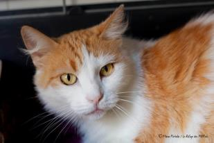hydra-minette-adorable-a-adopter-