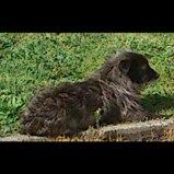 perdu-chien-croise-teckel-noir-