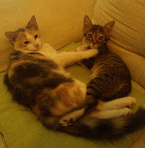 donne-deux-chattes-d-1an