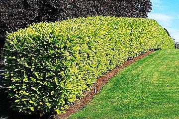Cesu jardinage et entretien jardin toulouse 31 for Entretien jardin emploi