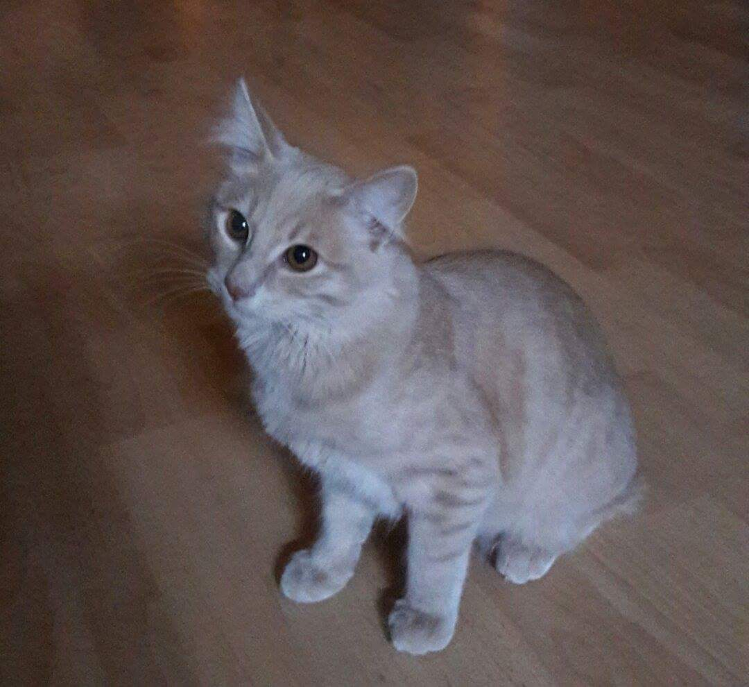 chat toulouse