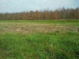 Terrain constructible à vendre Léguevin 31490