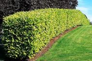 annonces.Toulouse-annuaire - Taille Jardinage Sud De Toulouse Roquettes Muret Carbonne