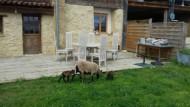 annonces.Toulouse-annuaire - Gite Familial à La Campagne Chez Denis Vue Imprenable Sur Les Pyrénées