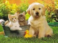 annonces.Toulouse-annuaire - Garde De Votre Animal