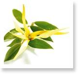 annonces.Toulouse-annuaire - Journée D'aromathérapie Familiale